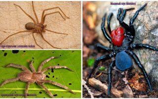 Penerangan dan gambar labah-labah yang paling berbahaya di dunia