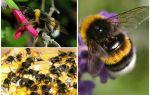 Penerangan dan gambar-gambar di bumi kumbang