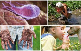 Giardia cysts dalam tinja seorang kanak-kanak: bagaimana mereka melihat dan bagaimana untuk merawat