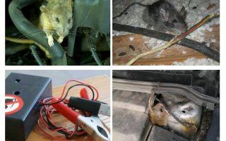 Bagaimana untuk menghilangkan tikus di bawah hud kereta