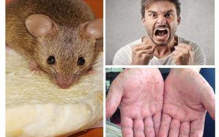 Apa yang boleh dijangkiti daripada tikus