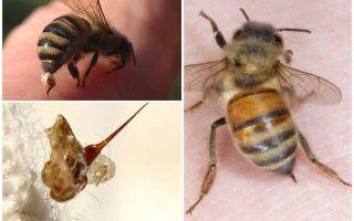 Bee sengat dan tawon