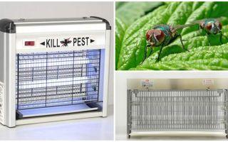 Bagaimana untuk membuat perangkap untuk lalat di rumah