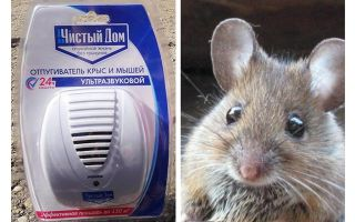 Repeller ultrasonik dari tikus dan tikus Rumah bersih