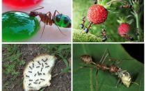 Apa semulajadi makan semulajadi