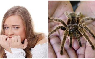 Apakah nama takut labah-labah (fobia) dan kaedah rawatan