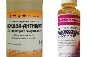 Sekatan Anti-bug daripada bedbugs