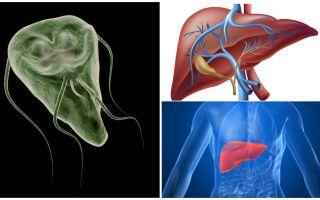 Giardia di hati - gejala dan rawatan