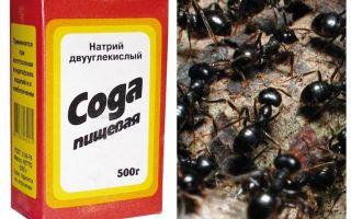 Soda terhadap semut di taman