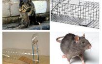Bagaimana untuk mendapatkan tikus keluar dari rumah persendirian