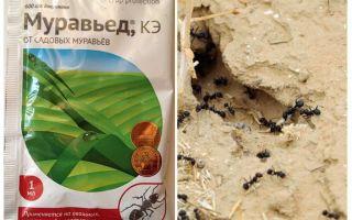 Ant remedi Arahan dan ulasan anteater