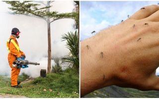 Bermakna untuk memproses kawasan dari nyamuk dan kutu