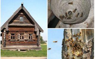 Bagaimana untuk mendapatkan lebah keluar dari rumah kayu dan tempat-tempat lain