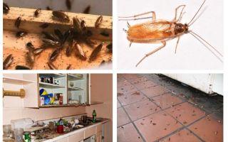 Apa yang perlu dilakukan sekiranya anda melihat lipas di dapur