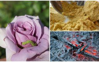 Bagaimana untuk menyembur mawar dari ulat dan aphids