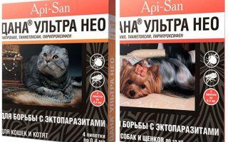 Dana Ultra Neo jatuh dari kutu untuk kucing dan anjing