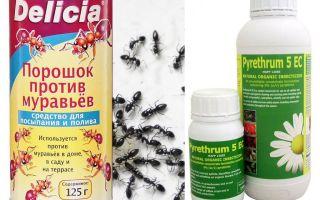 Racun semut di apartmen atau rumah