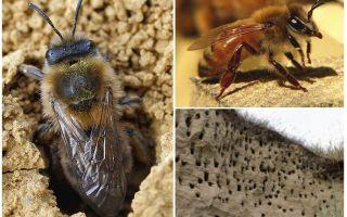 Bagaimana untuk menghapus lebah bumi dari laman web ini