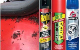 Bagaimana untuk mendapatkan semut daripada kereta