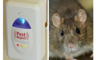 Redzhekt perosak ultrasonik tikus dan serangga