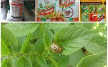 Racun dan racun yang paling berkesan dari kumbang kentang Colorado