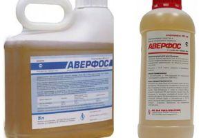 Berarti Averfos dari bedbugs