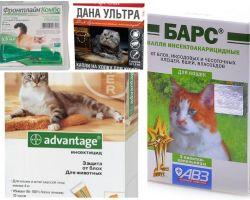 Menurun pada layu dari kutu untuk kucing dan kucing