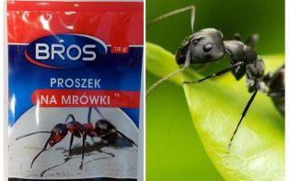 Bermakna Membuang Semut