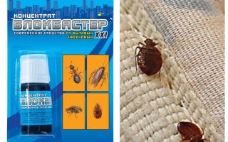 Sekat Blockbuster dari bedbugs