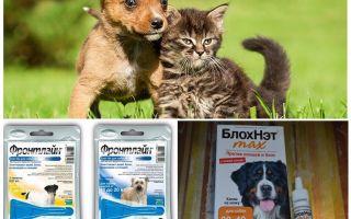 Bagaimana dan bagaimana untuk melindungi seekor anjing dari nyamuk dan blackflies