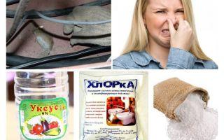 Bagaimana untuk menghilangkan bau tikus