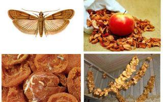Apa yang perlu dilakukan jika tahi lalat bermula dalam buah kering