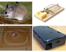 Bagaimana untuk membuang tikus dari rumah peribadi