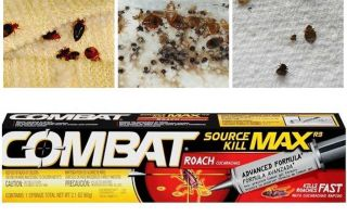 Berarti Kombat dari bedbugs