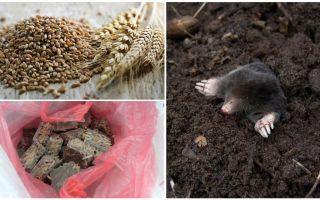 Bagaimana dan bagaimana untuk meracuni tahi lalat
