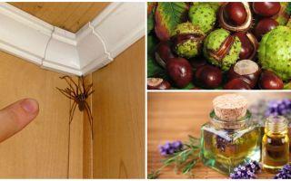 Kaedah dan alat untuk labah-labah di sebuah apartmen atau rumah persendirian
