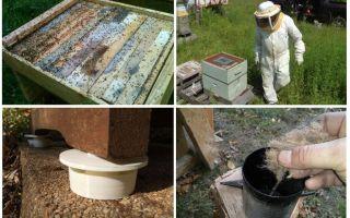 Bagaimana untuk menghilangkan semut dalam ubat-ubatan rakyat apiari