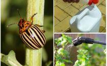 Ubat terbaik dari kumbang kentang Colorado pada kentang
