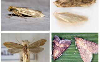 Apa yang membantu dari rama-rama dan larva