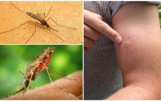 Apa yang perlu dilakukan jika anda digigit oleh nyamuk anopheles