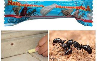 Pensil Masha dari semut