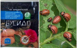 Ubat untuk Bushido Colorado kentang kumbang: arahan untuk kegunaan, keberkesanan, ulasan