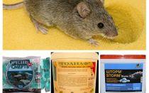 Racun dari tikus