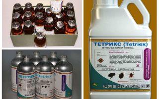 Tetris ubat untuk bedbugs