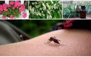 Bagaimana untuk menangani nyamuk di sebuah apartmen atau rumah