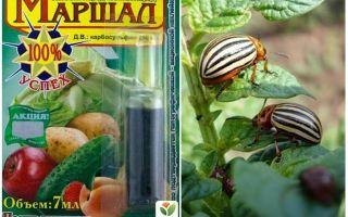 Bermakna Marshal dari kumbang kentang Colorado