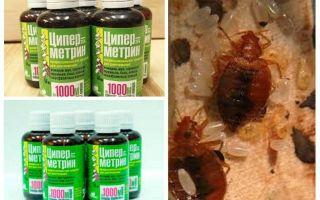 Cypermethrin daripada bedbugs
