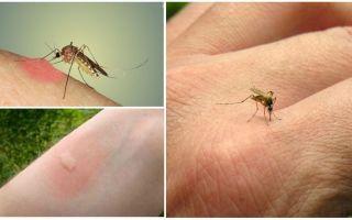 Mengapa nyamuk menggigit sesetengah orang lebih daripada yang lain
