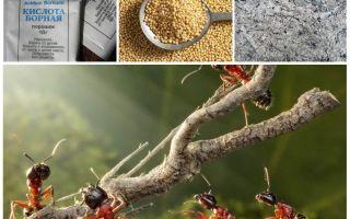 Memperjuangkan semut di taman rakyat ubat-ubatan remedi