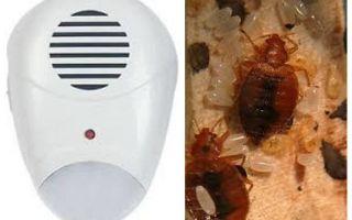 Repeller Pest Repeller dari bedbugs